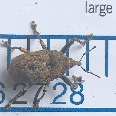 Find-A-Pest interesting find in a Pak n Sav box