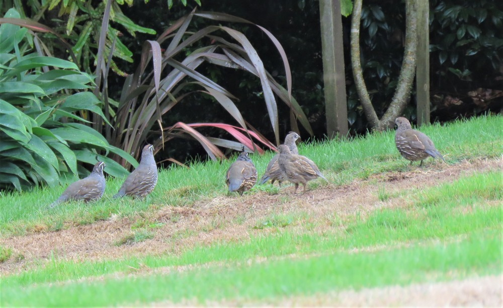 Trapping-rats-in-order-to-protect-our-native-birds